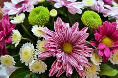 Bunte und beauyful Blumen Lizenzfreies Stockbild