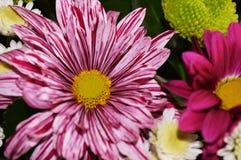 Bunte und beauyful Blumen Lizenzfreies Stockfoto