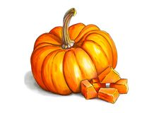 Bunte und saftige Illustration des orange Kürbises stockbild