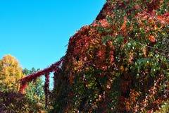 Bunte und schöne Herbstsaison lizenzfreie stockfotografie