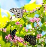 Bunte und schöne Schmetterlinge Lizenzfreies Stockbild