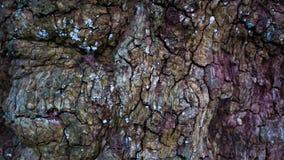 Bunte und strukturierte Baumrinde stockfotos