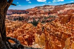 Bunte Unglücksbote-Felsformationen in Bryce Canyon National Park, U Lizenzfreies Stockfoto