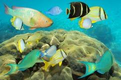 Bunte Unterwasserfische über korallenrotem karibischem Meer Lizenzfreie Stockfotografie