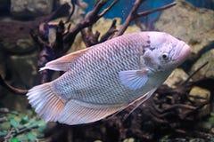 Bunte Unterwasserwelt Lizenzfreies Stockfoto
