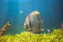 Bunte Unterwasserwelt Lizenzfreie Stockfotografie