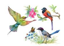 Bunte Vögel und Schmetterling des Aquarells mit Blättern und Blumen Stockfoto