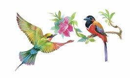 Bunte Vögel und Schmetterling des Aquarells mit Blättern und Blumen Stockbild