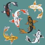 Bunte verschiedene Arten von Karpfen koi fischen im Teich Lizenzfreie Stockfotos