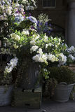 Bunte Vielzahl der Blumen Stockfotografie