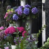 Bunte Vielzahl der Blumen Stockfoto