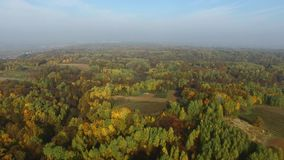 Bunte Wälder, Herbst, Vogelperspektive stock video