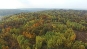 Bunte Wälder, Herbst, Vogelperspektive stock footage