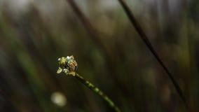 Bunte Wanze an der Blume mit Naturtau Lizenzfreie Stockbilder