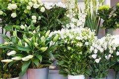 Bunte weiße Blumen in einem Blumensystem Stockfotos