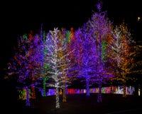 Bunte Weihnachtsbäume Stockfotos