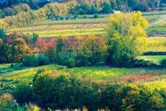 Bunte Weinfelder stockfotografie