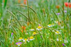 Bunte wilde Blumen Stockfoto