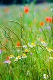 Bunte wilde Blumen Stockfotografie