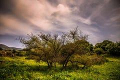 Bunte Wolkennatur des Baumhimmels lizenzfreie stockfotos