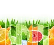 Bunte Zitrusfrüchte des Regenbogens streifen Sammlung auf dem weißen Ba Stockfoto