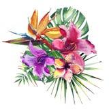 Bunte Zusammensetzung schönen hellen reizenden wunderbaren tropischen Hawaii-Blumenkräutersommers des tropischen roten rosa Veilc Lizenzfreies Stockbild