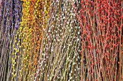 Bunte Zweige des Pfirsichbaums Lizenzfreie Stockfotos