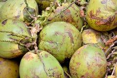 Cocoanut med rått täcker Royaltyfria Foton