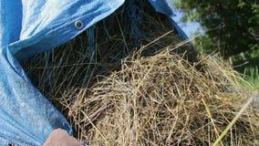 Bunten av sugrör eller hö täckas med blå polyetylen i den öppna luften i sommar stock video