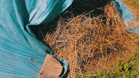 Bunten av sugrör eller hö täckas med blå polyetylen i den öppna luften i sommar lager videofilmer