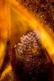 Bunter, abstrakter Mikrograph von Moosblättern stockbild