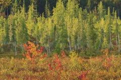 Bunter Adirondack Sumpf Lizenzfreie Stockbilder