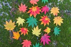Bunter Ahorn im Herbst in Korea Stockfotos