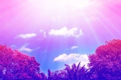 Bunter atumn Wald am Sonnenaufgangnatur-Pastellfarbhintergrund Lizenzfreie Stockbilder