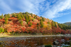 Bunter Autumn Leaf und Fluss mit blauem Himmel Stockbilder