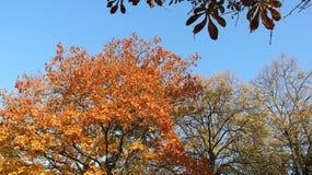 Bunter Autumn Leaves With Clear Blue-Himmel lizenzfreie stockbilder