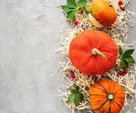 Bunter Autumn Pumpkins lizenzfreie stockfotos