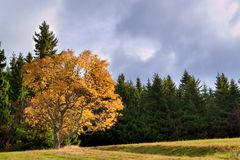 Bunter Baum Stockfoto