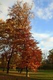 Bunter Baum im Nachmittagssonnenlicht, Prag, Europa Lizenzfreies Stockfoto