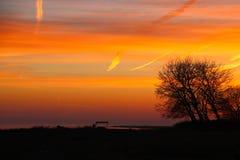 Bunter Baum im Sonnenuntergang Lizenzfreie Stockbilder