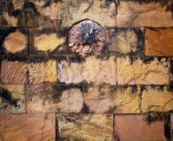 Bunter befleckter Löwestein und alter Backsteinmauerhintergrund Lizenzfreie Stockfotografie