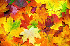 Bunter Blatthintergrund des Herbstes Lizenzfreies Stockbild