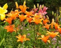 Bunter Blumen-Garten mit Daylilies Stockfotografie