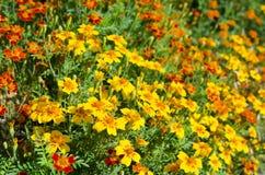 Bunter Blumenbeethintergrund Lizenzfreie Stockfotos