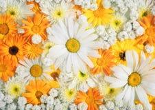 Bunter Blumenblumenstrauß, Blumenhintergrund Lizenzfreies Stockbild