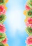 Bunter Blumenfrühlingsrand Stockfoto