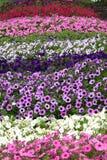 Bunter Blumengarten stockbilder
