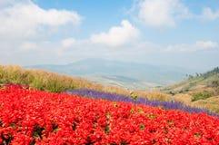 bunter Blumengarten Lizenzfreie Stockfotografie