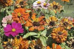 bunter Blumengarten Stockfotografie