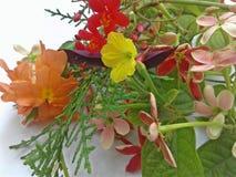 Bunter Blumenhintergrund stockfoto